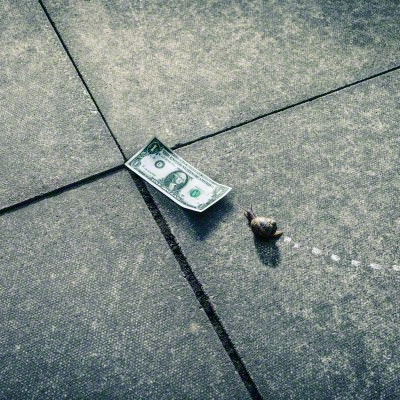 snail inching toward dollar bill